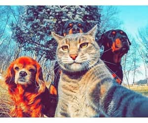 cat, dog, and dz image