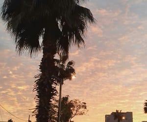 oran, palmiers, and like california image