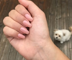 dog, nails, and Nude image