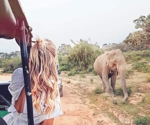 travel, elephant, and animal image
