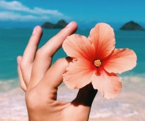 beach, flower, and sun image