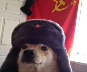 communism and reaction image