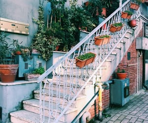 beautiful, flowers, and steps image