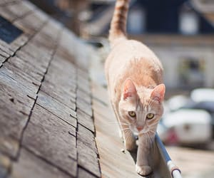 cat, roof, and photography image