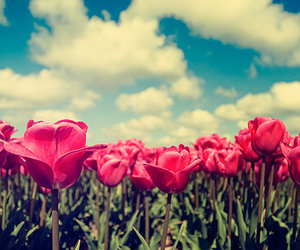 flowers, sky, and tulips image