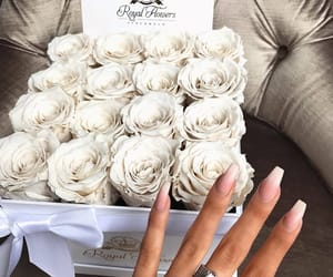 roses, beautiful, and flowers image