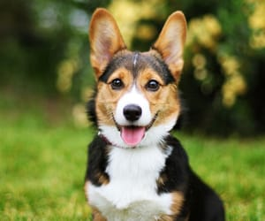 dog, dogs, and cute image