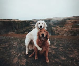 dog, animal, and love image