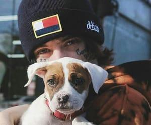 dog and lil xan image