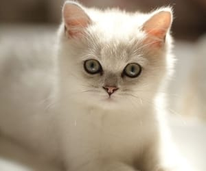 Animal kingdom, cats, and cute animals image