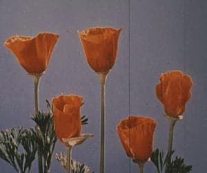 gif, flowers, and aesthetic image