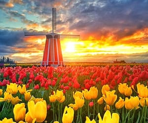 flowers, photography, and windmill image