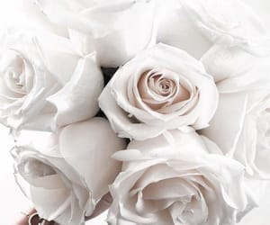 aesthetic, bouquet, and roses image