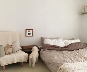 dog, interior, and room image