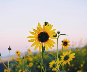 daisy, flower, and flowers image