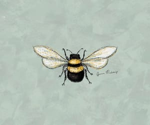 animal and bee image