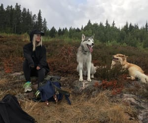 dogs, nature, and outdoors image