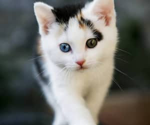 cat, cutee, and wallpaper image