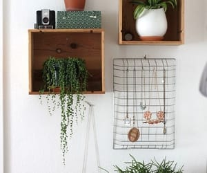 plants image