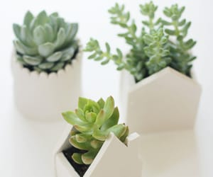 plants, succulent, and nature image