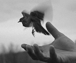 bird, black and white, and hand image