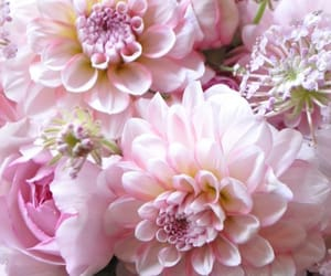 background, dahlia, and flowers image
