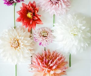 background, nature, and dahlia image