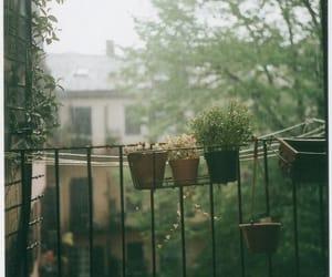 nature, flowers, and rain image