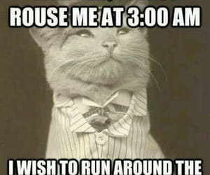 3 am, batshit insane, and cats request image
