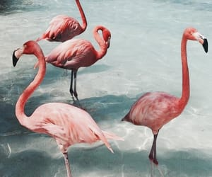 flamingo, animal, and beach image