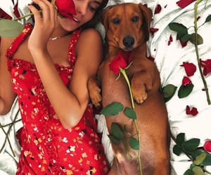 dachshund, dog, and dress image