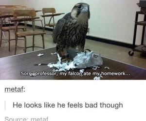 funny, tumblr, and bird image