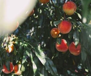 orange, peach, and summer image