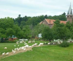 schwarzwald, idylle, and ziege image