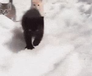 kitten and gif image