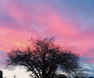 aesthetic, nature, and pink image
