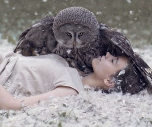 beauty, owl, and protective image