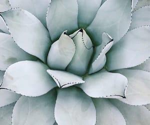 aloe, plant, and aloe vera image