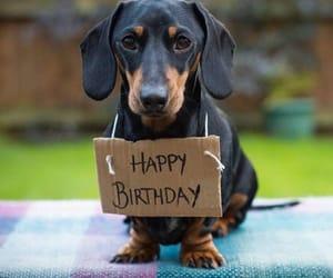 foto, happy birthday, and photo image