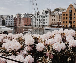 buildings, city, and flowers image