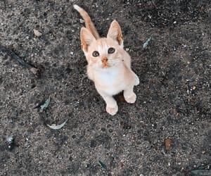 cat, gatinho, and cute image