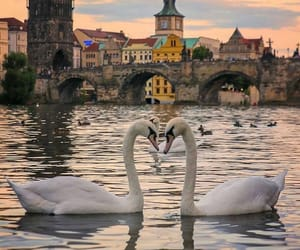 Swan, place, and travel image