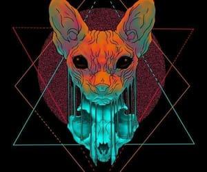 cats, mascota, and felinos image