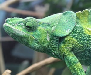 animals, green, and reptiles image