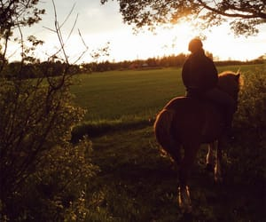 equestrian, evening, and forest image