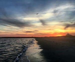 beach, beautiful, and bird image
