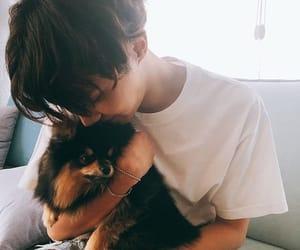 asian, dog, and hoseok image