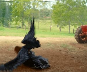 angel, wings, and blackwings image