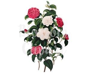 etsy, florals, and vintage flower image