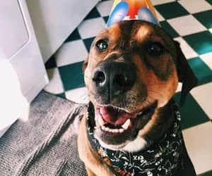beautiful, birthday, and dog image
